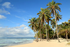 Beautiful white sand beach in Caribbean Islands Stock Images