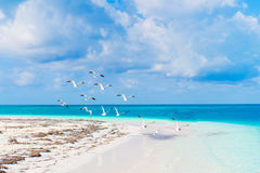 Beautiful white sand beach and Caribbean sea with turquoise water Royalty Free Stock Images