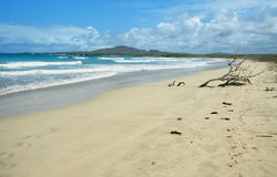 Beautiful white sand beach in the Galapagos Islands, Ecuador Stock Photography