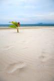 Beautiful white sand beach at Nai Harn Beach, Rawai, Phuket, Thailand Royalty Free Stock Image
