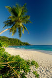 Beautiful white sand beach with palm tree. A beach in paradise is the perfect place for a honeymoon or a romantic week end royalty free stock photo
