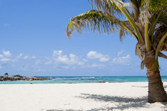 Beautiful white sand Caribbean beach Royalty Free Stock Photography