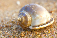 Sea shell on sand background Royalty Free Stock Photography