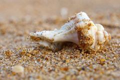 Sea shell on sand background Stock Images