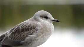 Beautiful white seagull stock footage