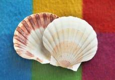 Beautiful seashells on a colored background. Beautiful white seashells on a colored background Stock Image