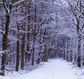 Beautiful white snowy forest landscape with road, winter season in the woods of Rucphen, The Netherlands stock photography