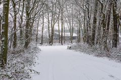 Beautiful white snowy forest with a road fully covered in white snow, winter season background, Dutch forest in cold weather stock photo