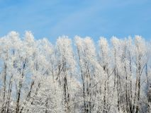 Snowy trees in winter, Lithuania Stock Photography