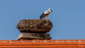 Beautiful white stork resting on the nest Stock Photo