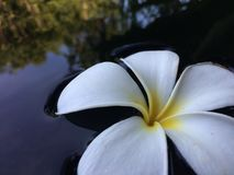 A beautiful white flower stock photography