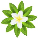 Beautiful white tropical flower vector illustration