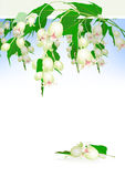 Beautiful White Tropical Flowers And Leav Royalty Free Stock Images