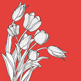 Beautiful white tulip flowers bouquet on red background.  Stock Photography