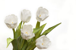 Beautiful white tulips Royalty Free Stock Images