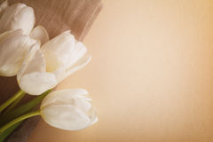 Beautiful  white tulips on paper background with copy space Royalty Free Stock Photography