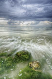 Beautiful white wave flow over the algae and rock on the beach Stock Image