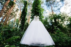 Beautiful white wedding dress hanging on a tree. With ivy in sunny day Stock Photo