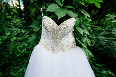 Beautiful white wedding dress hanging on a tree with ivy. In sunny day. Lace top wedding dress Stock Photos
