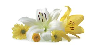 Beautiful white and yellow flower heads Royalty Free Stock Image