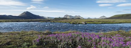 Free Beautiful Wide Panoramic Icelandic Landscape With Wild Pink Flowers, Blue Glacier River And Green Mountains. Blue Sky Stock Photo - 160317260