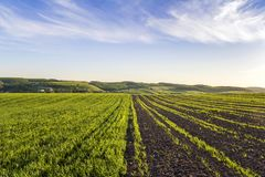 Beautiful wide peaceful panorama of plowed and green fields lit by morning sun stretching to horizon under bright blue sky on dist. Ant hills and village royalty free stock image