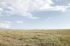 Beautiful wide spread Grassland of Ol Pejeta Conservancy, Kenya. Ol Pejeta Conservancy is a vast game reserve in Kenya Stock Photo