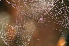 Beautiful Wide Web Stock Photos