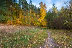 Beautiful wild autumnal forest with colorful fallen leaves Royalty Free Stock Photo