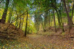 Beautiful wild autumnal forest with colorful fallen leaves Stock Photos