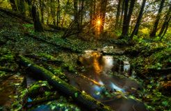 Beautiful wild autumnal forest with small stream. Stock Photography