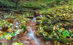 Beautiful wild autumnal forest with small stream. Royalty Free Stock Photos