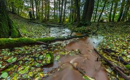 Beautiful wild autumnal forest with small stream. Royalty Free Stock Photo