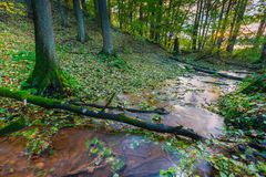 Beautiful wild autumnal forest with small stream. Royalty Free Stock Photography