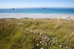 Beautiful wild beach Royalty Free Stock Photography