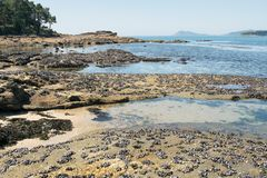 Beautiful wild beach at low tide with rocks and mussels. stock photo