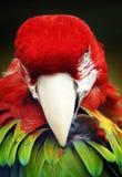 Beautiful wild bird parrot Kakadu Stock Images