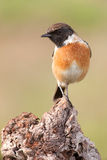 Beautiful wild bird perched on a branch Stock Images