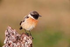 Beautiful wild bird perched Stock Image