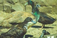 beautiful wild birds Stock Image