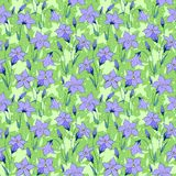 Beautiful wild bluebell flowers seamless pattern 3 Royalty Free Stock Images