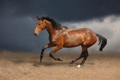 Beautiful wild brown horse galloping on sky Stock Images