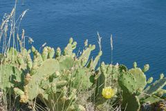 Beautiful wild cactus with blue sea background royalty free stock images