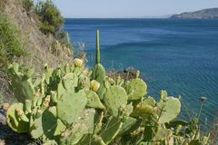 Beautiful wild cactus with blue sea background stock photo