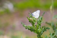Beautiful wild colorful  butterfly resting on plant. Insect macro Stock Images