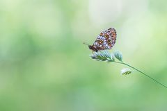 Beautiful wild colorful  butterfly resting on plant. Insect macro Royalty Free Stock Photo
