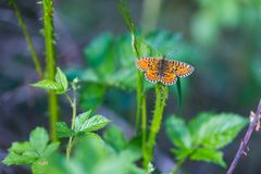 Beautiful wild colorful  butterfly resting on plant. Insect macro Royalty Free Stock Photography