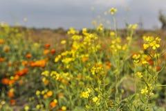 Beautiful wild field flowers background Stock Photos