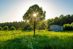 Beautiful wild field with a single tree. And sun royalty free stock images