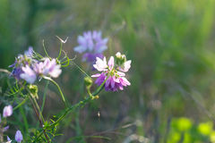 Beautiful wild flower in the sun Stock Photography